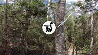 The 360° video shows the preservation of forest on Madagascar.